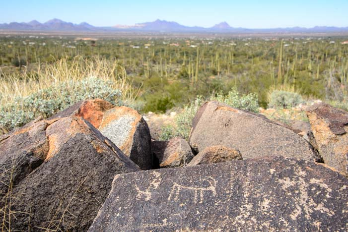 big horn sheep petroglyph Saguaro National Park Signal Hill AZ