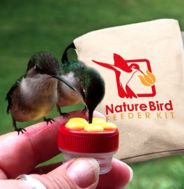Hummingbird hand-feeding kit