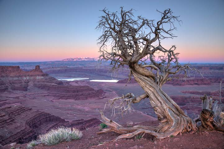 Tree at Dead Horse Point State Park Utah