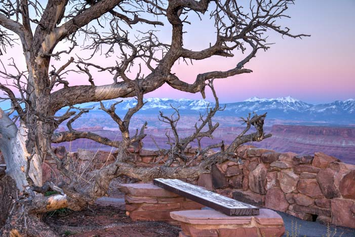Bench and tree Dead Horse Point State Park Utah