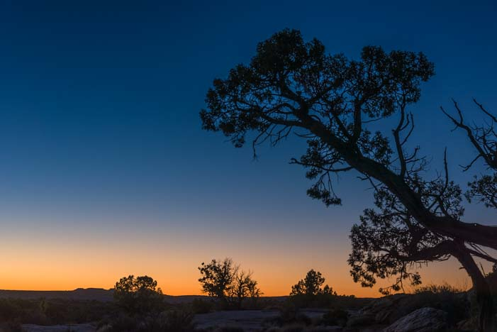 Twilight tree at Dead Horse Point State Park Utah