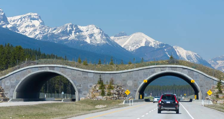 Wild animal overpass Banff National Park Canada