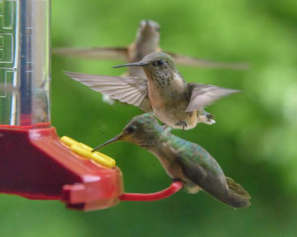 Hummingbirds line up at RV window feeder