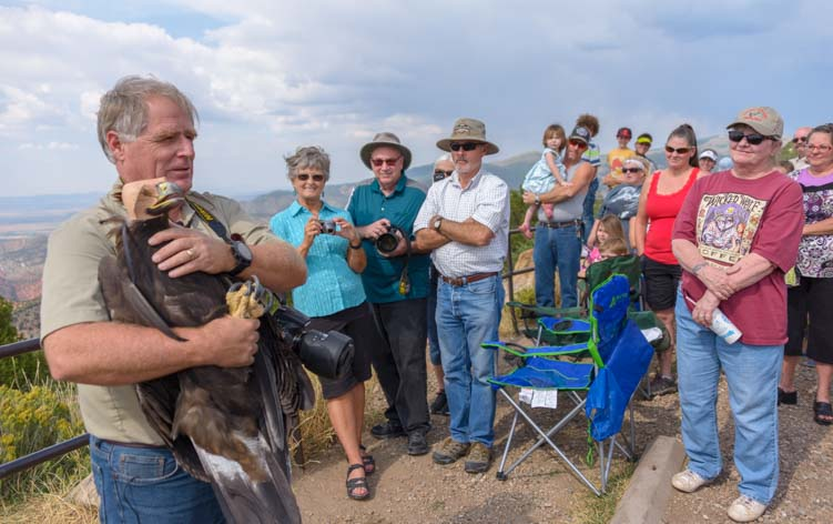 Southwest Wildlife Foundation Director Martin Tyner prepares to release a Golden Eagle into the wild in Cedar City Utah
