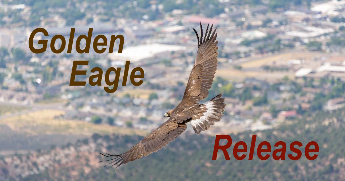Golden Eagle release Southwest Wildlife Foundation Cedar City Utah
