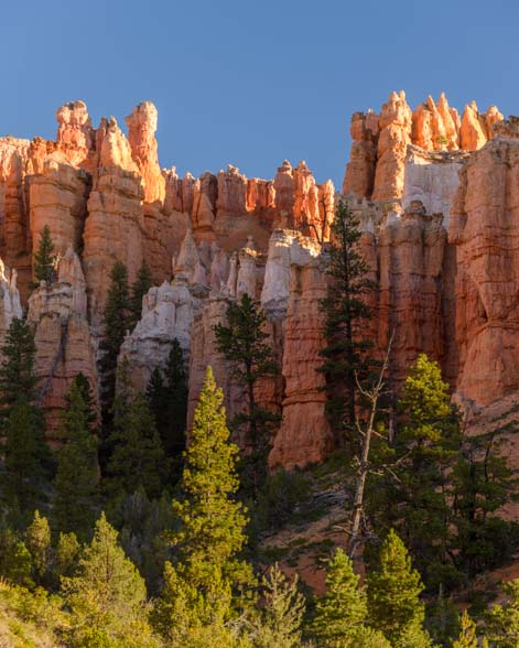 Colorful trees and red rocks Mossy Cave Trail Bryce Canyon National Park Utah