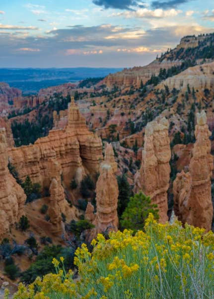 Flowers at Fairyland Point Bryce Canyon National Park Utah