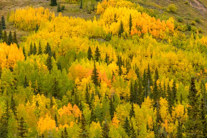 Colorful hillside San Juan Skyway Colorado Rocky Mountains Autumn Leaves