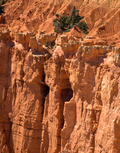 Alice Cooper eyes at Rainbow Point Bryce Canyon National Park Utah