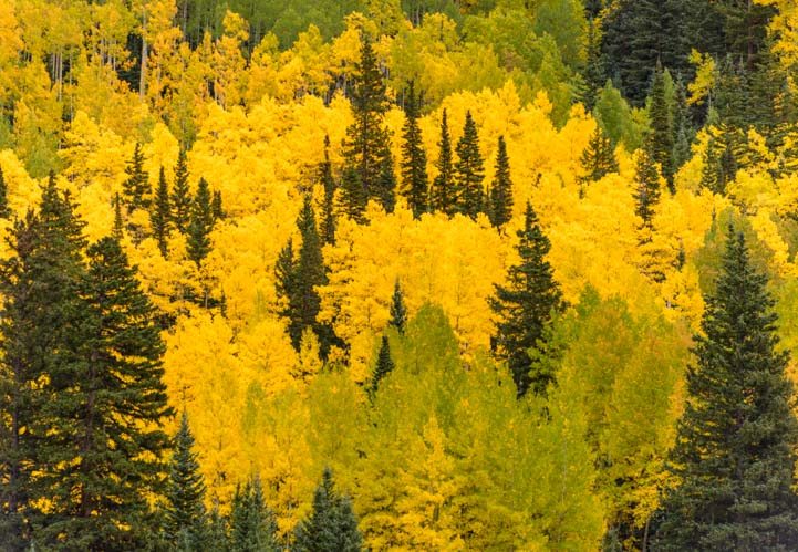 Leaf patterns in fall San Juan Skyway Colorado Rocky Mountains