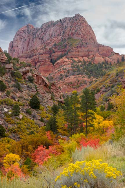 Autumn Foliage Taylor Creek Trail Kolob Canyons Zion National Park Utah