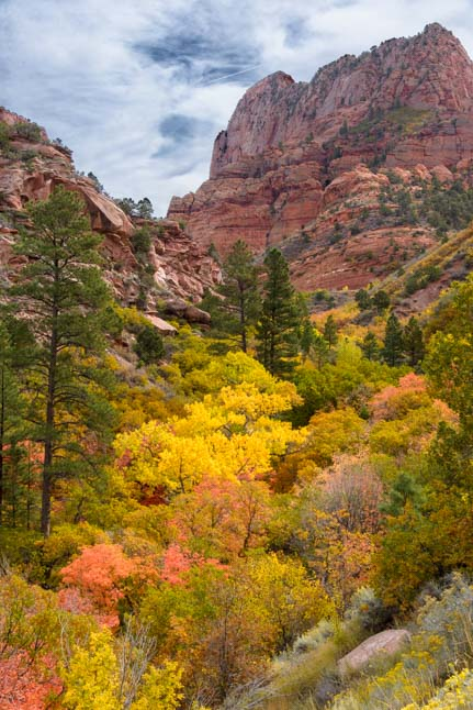 Fall Foliage Taylor Creek Trail Kolob Canyons Zion National Park Utah