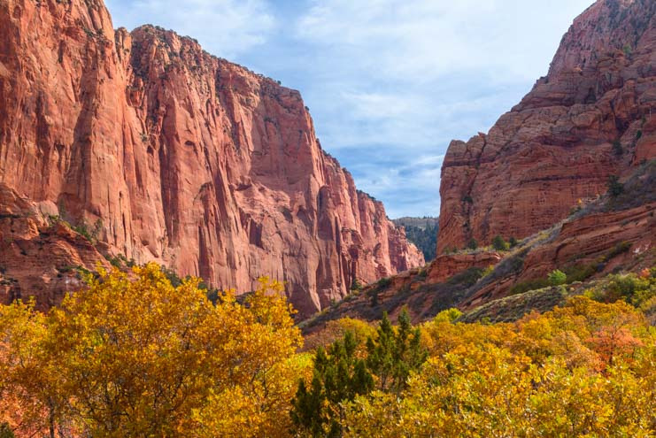 Autumn Leaves Kolob Canyons Zion National Park Utah