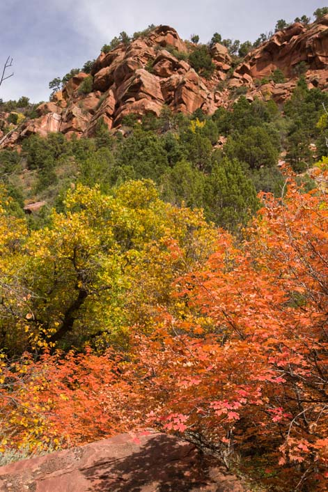 Autumn color Taylor Creek Hike Zion National Park Utah