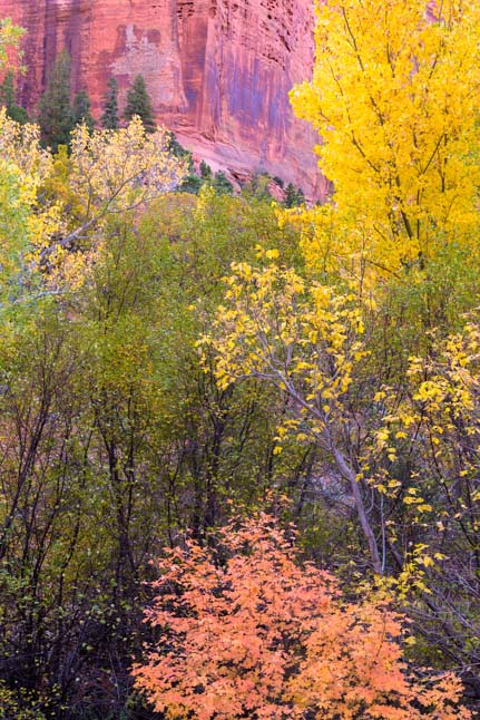 Red rocks autumn leaves Zion National Park Kolob Canyons