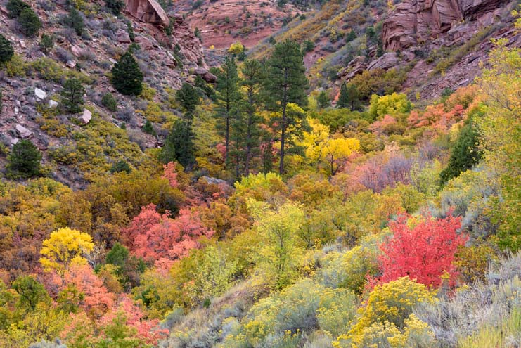 Fall Color Taylor Creek Trail Kolob Canyons Zion National Park Utah