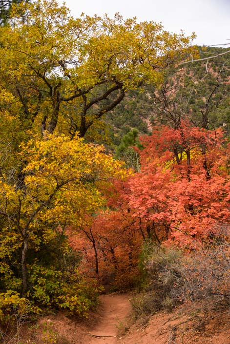 Autumn colors Taylor Creek Trail Hike Zion National Park Utah