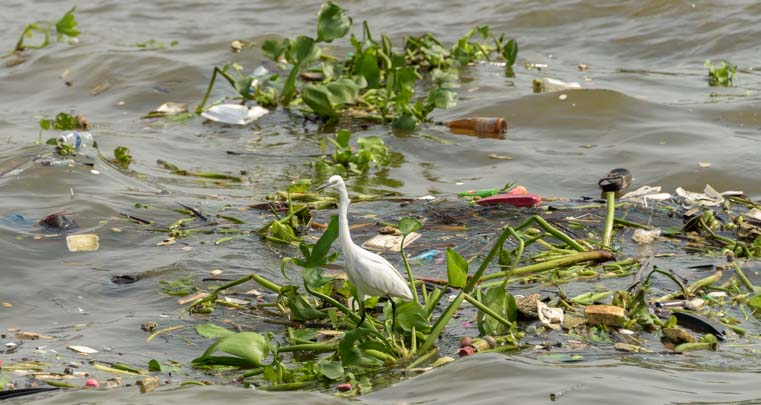 Egret in trash on Chao Phraya River Bangkok Thailand