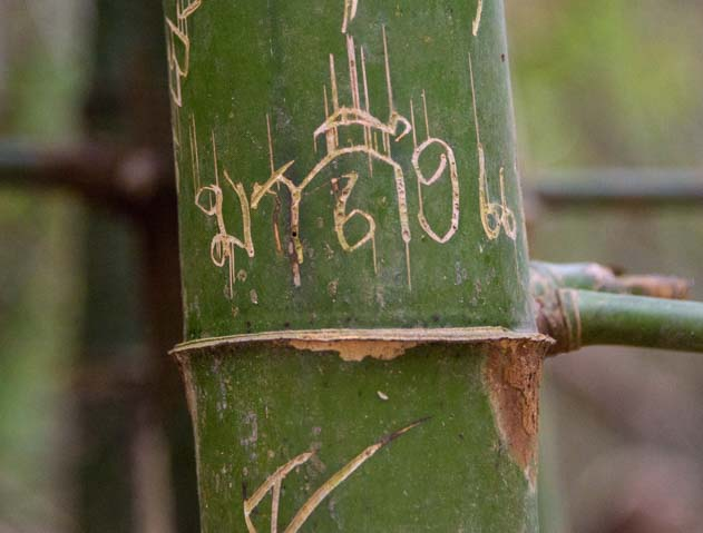 Thai graffiti on a bamboo tree Khuean Srinagarindra National ParkKanchanaburi Thailand