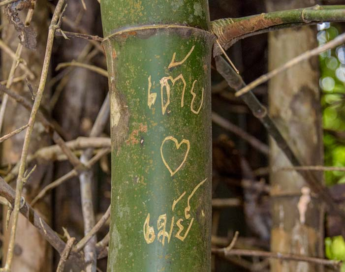 Thai graffiti on bamboo tree Sri Nakarin Dam National Park Kanchanaburi Thailand