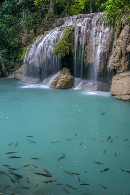 Fish at Erawan Waterfall Kanchanaburi Thailand