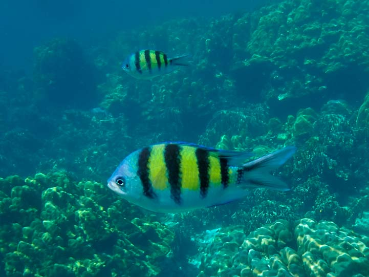 Reef Fish Dive and Relax Snorkeling Tour Ko Rok in Ko Lanta Thailand