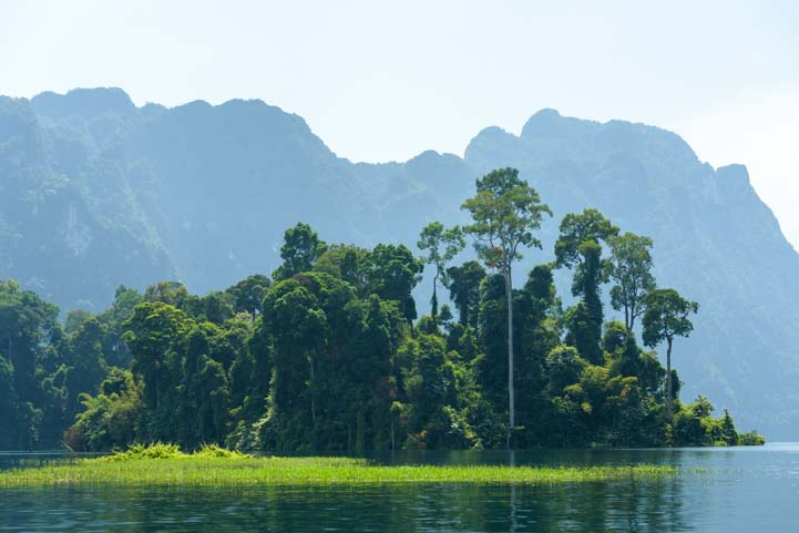 Lush vegetation Cheow Lan Lake Khao Sok National Park Thailand