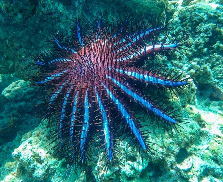 Purple Sea Star Dive & Relax Snorkeling Tour of Ko Rok in Ko Lanta Thailand