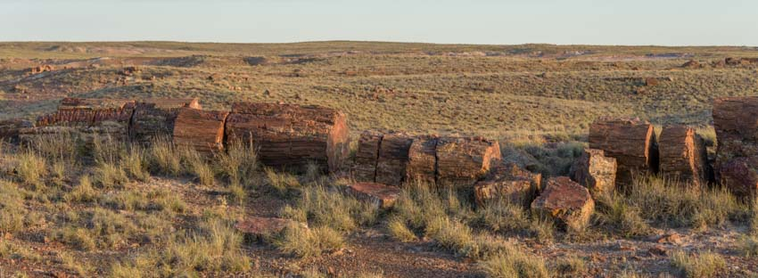 Petrified log Petrified Forest National Park Crystal Forest