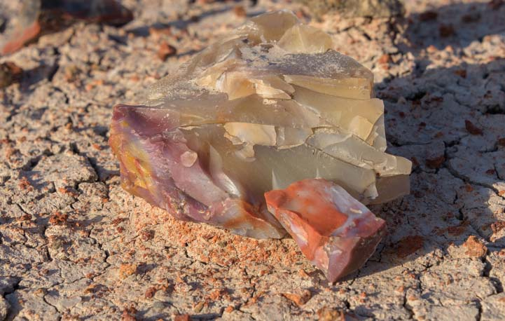Colorful agate Petrified Forest National Park Jasper Forest