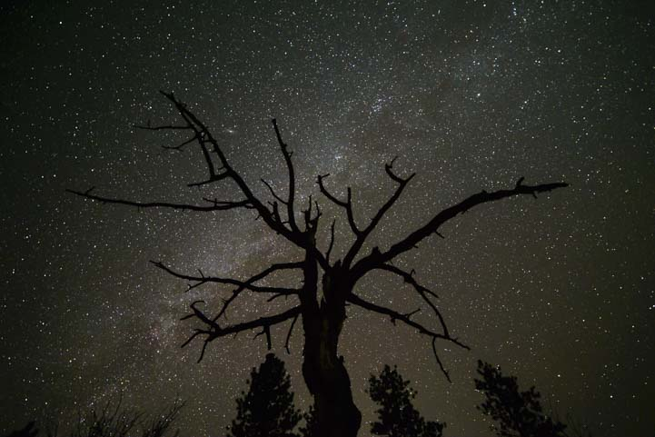 Milky Way and tree silhouette Bryce Canyon National Park