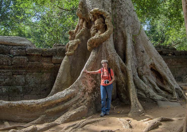 Enormous tree covers wall at Ta Prohm temple Siem Reap Angkor Cambodia