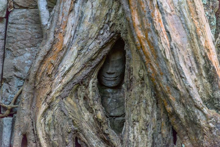 Face in tree Ta Prohm Angkor Siem Reap Cambodia