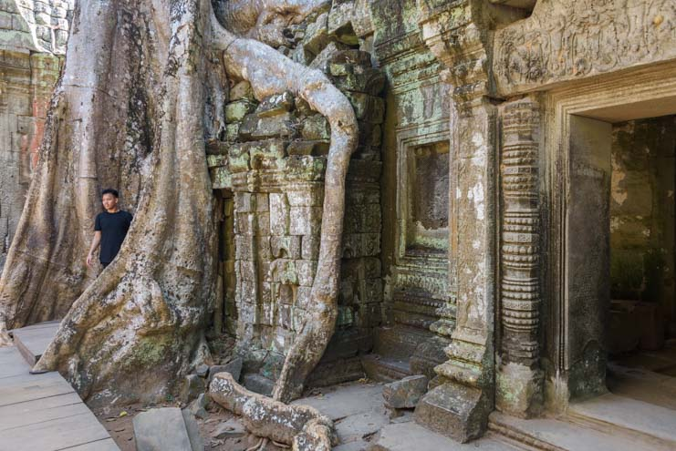 Tree and roots engulf ruins at Ta Prohm Angkor Siem Reap Cambodia