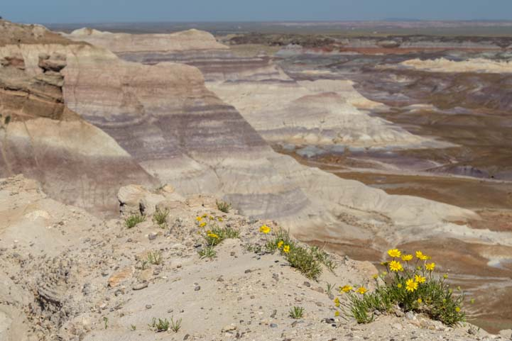 Blue Mesa Overlook Petrified Forest National Park Arizona