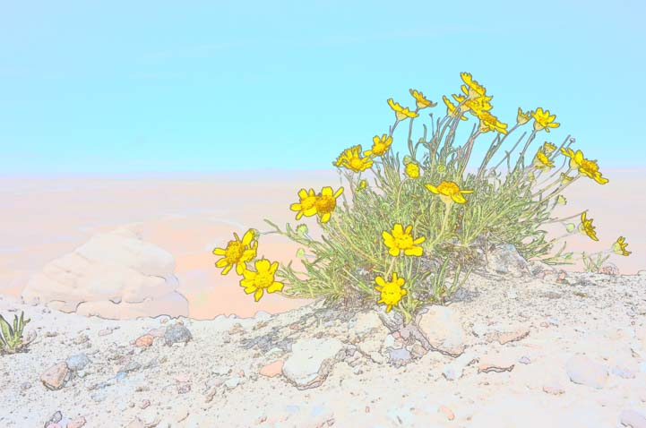 Color sketch Yellow wildflowers Blue Mesa Trail Petrified Forest National Park Arizona