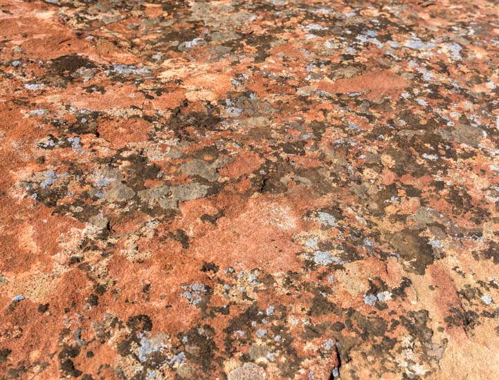 Lichen on red rocks Jackson Pollack painting Canyon de Chelly National Monument Arizona