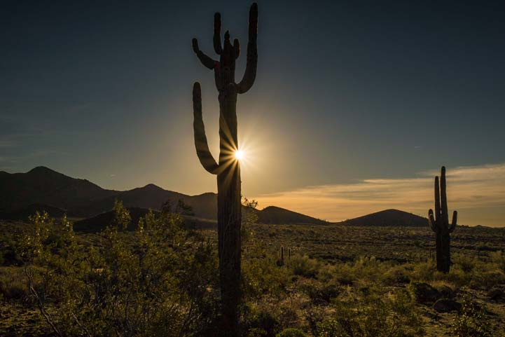 Saguaro cactus with starburst sunset Arizona