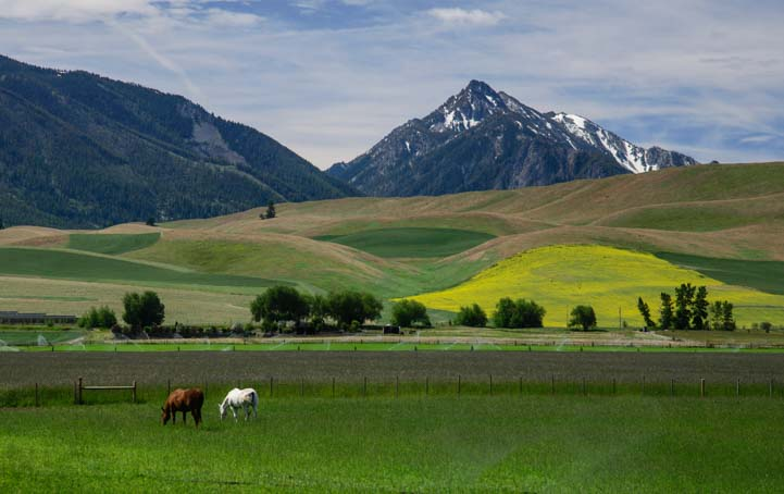 Wallowa Mountains Oregon with horses and pastures