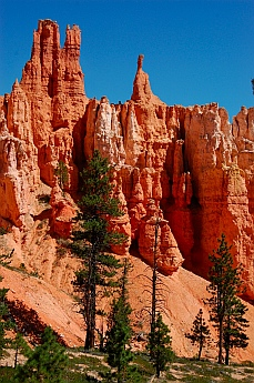 Spires and spikey trees surrounded us at Bryce Canyon, Utah