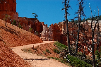 The Peek-a-boo hike at Bryce Canyon defies nature's laws and seems to ascend for the entire loop.