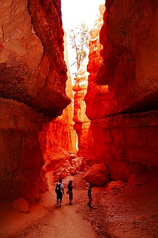 Nature's Wall Street at Bryce Canyon, Utah
