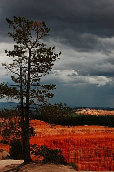 Rim views, Bryce Canyon, Utah