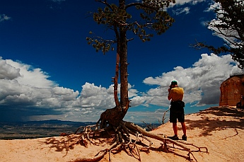 Trees cling to the rim at Bryce Canyon, Utah