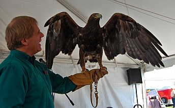 Golden Eagle: 7 lbs and 7,000 feathers Southwest Wildlife Foundation