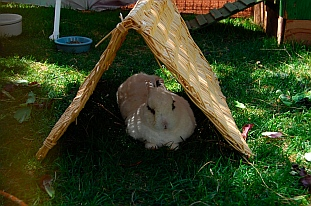 The Bunny House at Best Friends Animal Sanctuary, Kanab, Utah