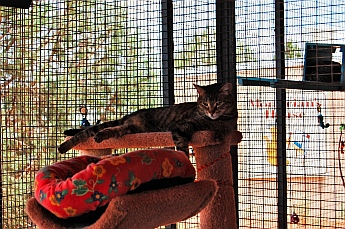 Siesta time at the Cat House Best Friends Animal Sanctuary, Kanab, Utah
