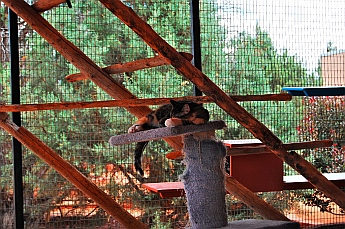 The cat house at Best Friends Animal Sanctuary, Kanab, Utah