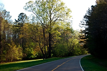 Driving along Natchez Trace Parkway, MS