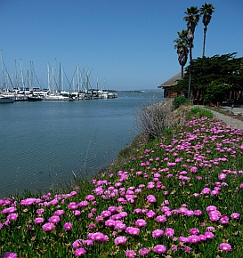 Emeryville, San Francisco Bay, California